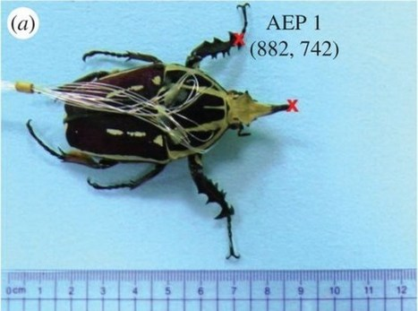 Scientists create living 'insect-computer hybrid' with user-adjustable speed and gait | Robots in Higher Education | Scoop.it