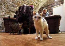 'Cat cafe' is purrrfect spot for animal lovers in Paris   Kickin' Kickers   Scoop.it