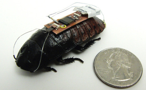 The Abstract :: North Carolina State University :: Researchers Develop Technique to Remotely Control Cockroaches | 6th Grade Science Finds | Scoop.it