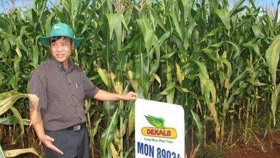 Vietnam - Seed merchants urge Vietnam to grow genetically modified crops | MAIZE | Scoop.it