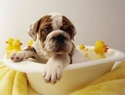 Pautas para el aseo habitual del perro : TiendAnimal   Perros   Scoop.it