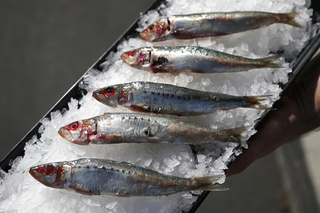#BreakingNews Federal Fisheries Regulators #Halt West Coast #Sardine Season  v @MissionBlue | Rescue our Ocean's & it's species from Man's Pollution! | Scoop.it