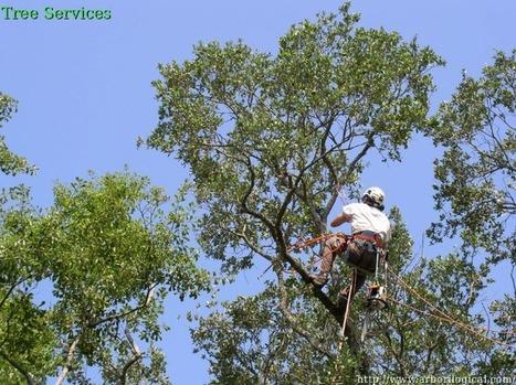 Richardson Tree Services   Arborilogical   Scoop.it