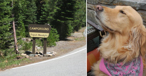 Lost dog lured from Tahoe wilderness after two long years | Pet Sitter Picks | Scoop.it