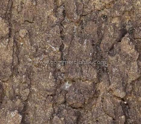 Artificial Buttonwood Tree Bark | Artificial, Silk Trees Knowledge Center | Scoop.it
