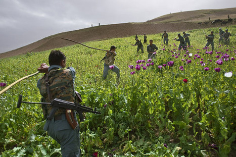 Afghanistan's Opium Wars - National Geographic Magazine | Gallery's APHG Best Finds | Scoop.it