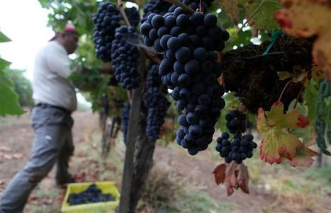 Global warming no friend of California wines   italianwine   Scoop.it