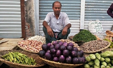 Bangladeshi farmers caught in row over $600,000 GM aubergine trial | GMO GM Articles Research Links | Scoop.it