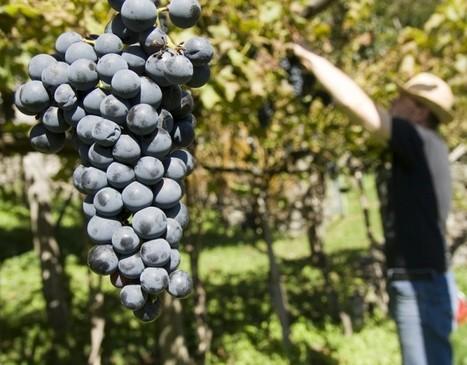 Le fruit-picking et le travail saisonnier en NZ - PVTistes.net | NZ | Scoop.it