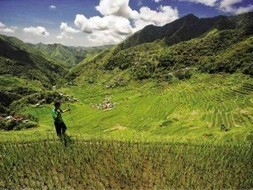 Environmentalists, farmers' groups raise alarm on 'Golden Rice' | Food issues | Scoop.it