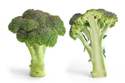 Broccoli variety has 'reliably higher' levels of healthy compound | Erba Volant - Applied Plant Science | Scoop.it