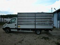 Suprastructura de transport animale   Zoom-Biz News   Scoop.it