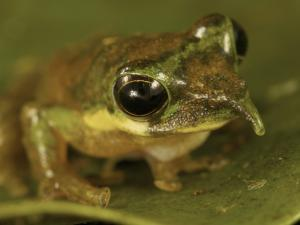 Getting to grips with sticky frogs | AJC's Frogroom | Scoop.it