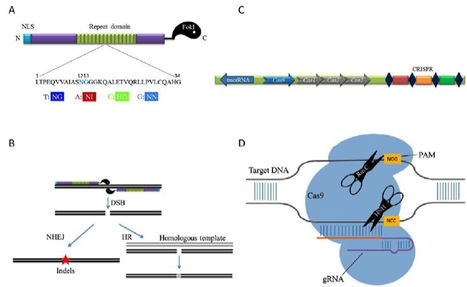TALEN or Cas9 -- rapid, efficient and specific choices for genomic modifications -Journal of Genetics and Genomics   lentiviral inspired editing   Scoop.it