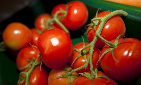 How eating tomatoes could increase male fertility   Health Matters Today   Scoop.it