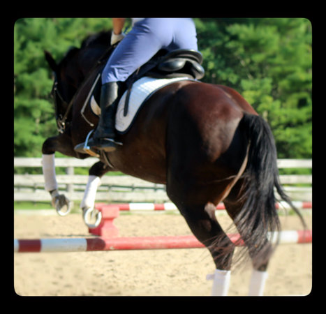5 Ways to Amp Up Your Warm Up in Horse Riding | The wonderful world of horses | Scoop.it