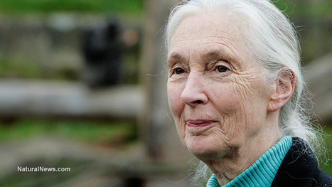 World-famous scientist Jane Goodall condemns GMO food and fraudulent industry 'science' | Food Science and Technology | Scoop.it
