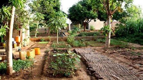 Au Mali, plusieurs milliers d'agriculteurs convertis à l'agro-écologie | Questions de développement ... | Scoop.it