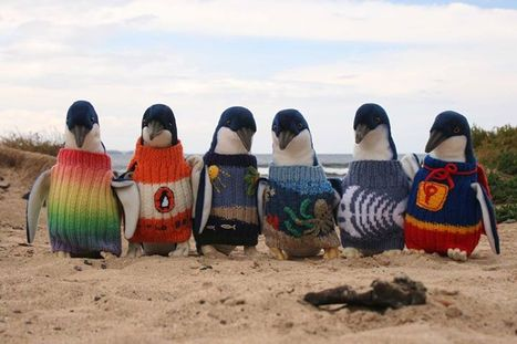 Australia's Oldest Man Knitted Tiny Sweaters for Injured Penguins | enjoy yourself | Scoop.it