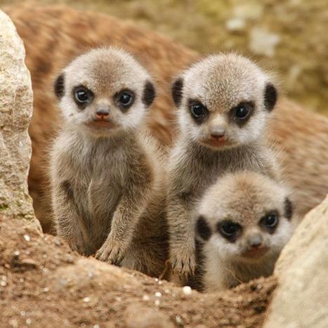 Deux nouvelles espèces de lémuriens découvertes à Madagascar | Akory! | Scoop.it