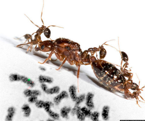 Bugs' Odd Behavior Governed By 'Supergene,' Scientists Say | BBSRC News Coverage | Scoop.it