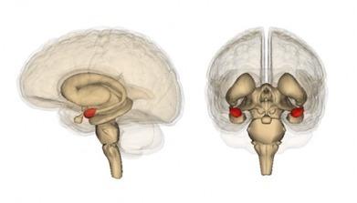 La méditation modifie durablement le fonctionnement du cerveau | approche par competences | Scoop.it