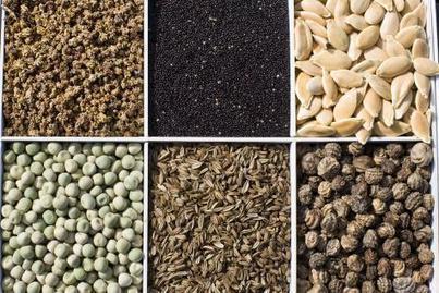 Les semences naturelles, trésors du terroir | Le Vin et + encore | Scoop.it