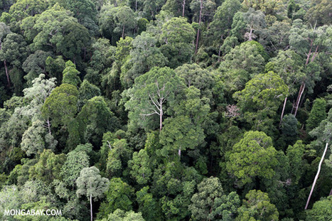 Rainforests may be more resilient to global warming - in isolation - than previously forecast | Amazon Rainforest | Scoop.it