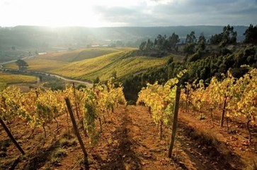 Wine regions may lose up to 73% of land by 2050 | Year 12 Geography | Scoop.it