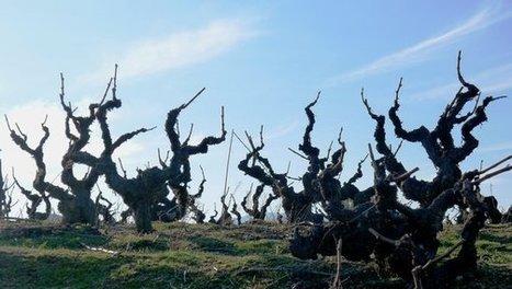 My Wine's Long Way Home | Vitabella Wine Daily Gossip | Scoop.it