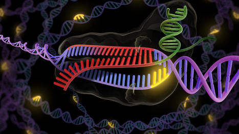 A CRISPR Way To Fix Faulty Genes   leapmind   Scoop.it