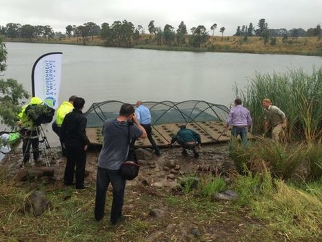 Floating Habitat Island – a first for regional NSW | Riverspace | Lorraine's Environmental Change &  Management | Scoop.it