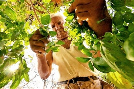 Quand un grand-père transmet son savoir et son amour de la nature | Les colocs du jardin | Scoop.it