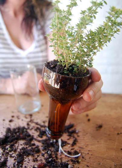 we like it wild: bottle gardens | Design*Sponge | iMobileHomes - Interior Gardens for Air Quality | Scoop.it