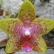 Fotos de Orquideas   Orquídeas   Scoop.it