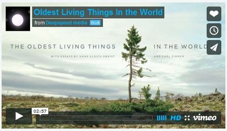 Free Technology for Teachers: The Oldest Living Things In the World | ESOL Mix | Scoop.it