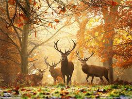Information Hub Of Besties.: National Geographic | RANGE ROVER EVOQUE | Scoop.it