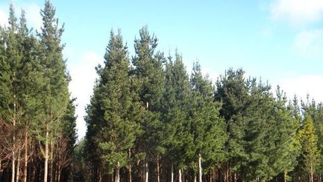 Forestry lobbies for Government investment in its future   Australian Forests   Scoop.it