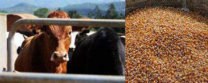 Public good programme for GM food?Weeding the Gems   GARNet Plant Science Community   Scoop.it