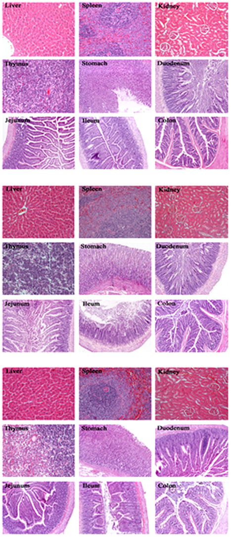 Effects of genetically modified T2A-1 rice on the GI health of rats after 90-day supplement : Scientific Reports : Nature Publishing Group   plant cell genetics   Scoop.it