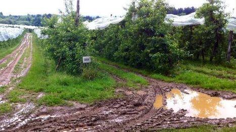 Dordogne : la pluie et le froid font du mal aux cultures | Agriculture en Dordogne | Scoop.it
