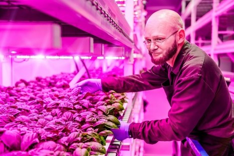 "The Weird And Wonderful World Of Indoor Farming (""climate change adaptation for agriculture"") 