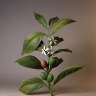 61 actividades sobre las plantas para estudiantes   Yo Profesor   Herramientas Tic   Scoop.it