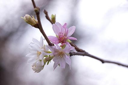 Le printemps en Hiver | Ca m'interpelle... | Scoop.it