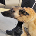 Explosives Detectors Aim to Go Nose to Nose With Sniffer Dogs | Biomimetics | Scoop.it