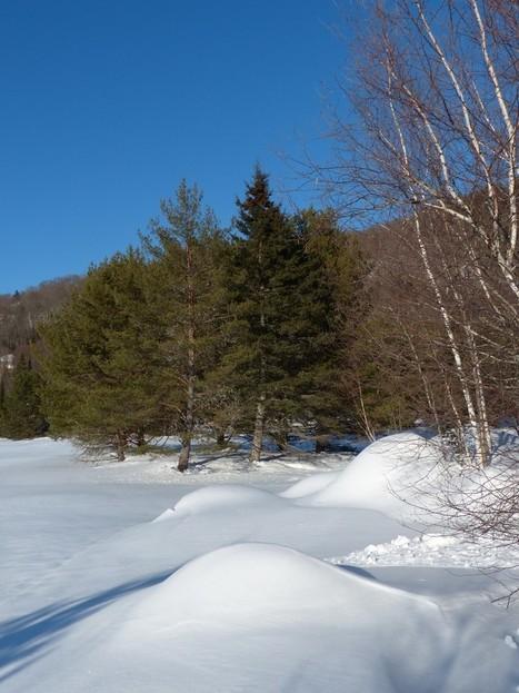 Québec - Canada - Lac Durand - Cantons-unis de Stoneham-et-Tewkesbury | Faaxaal Forum Photos gratuite Faune et Flore | Scoop.it