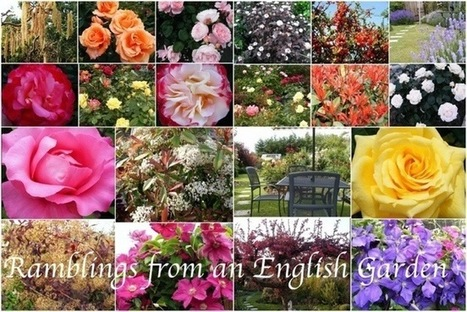 Ramblings from an English Garden: A Lot can Happen in a Month   Gardening   Scoop.it