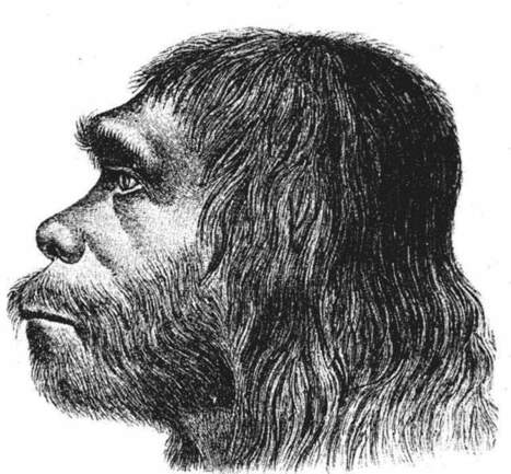 Why we beat the Neanderthals | Introduction to Psychology - PY40S | Scoop.it