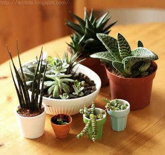 Arctida's creations: DIY Succulent gardens - how to instructions tabletop centerpiece | Flores y plantas | Scoop.it
