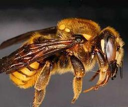 Pesticides short-circuit bee brains: study | Sustain Our Earth | Scoop.it
